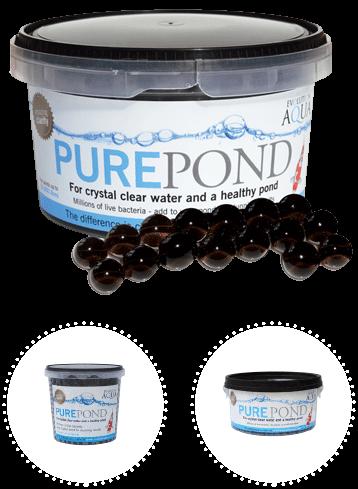 pure-pond bacteria